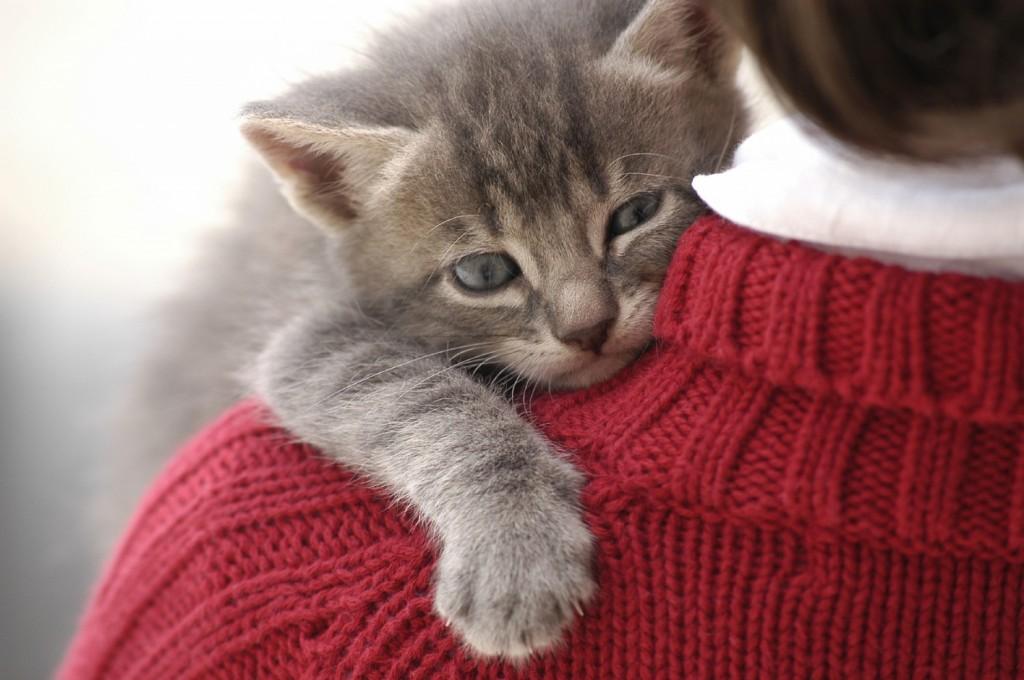 zalety bycia właścicielem kota