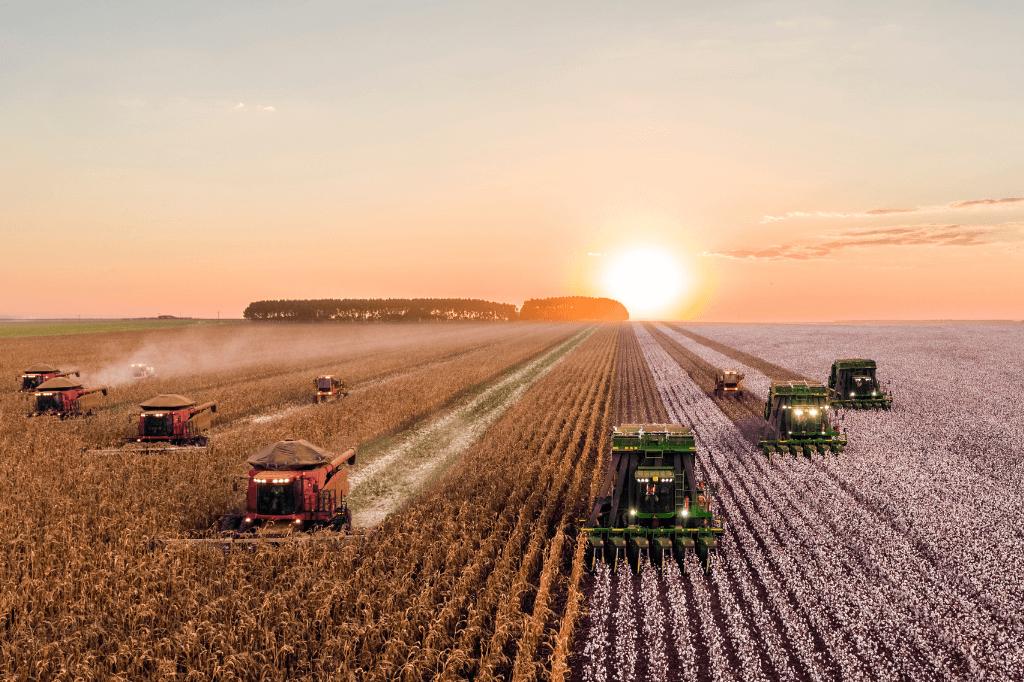 plantacje żywności
